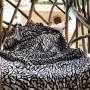 Serviette de bain Elephant Print | La Sneakerie